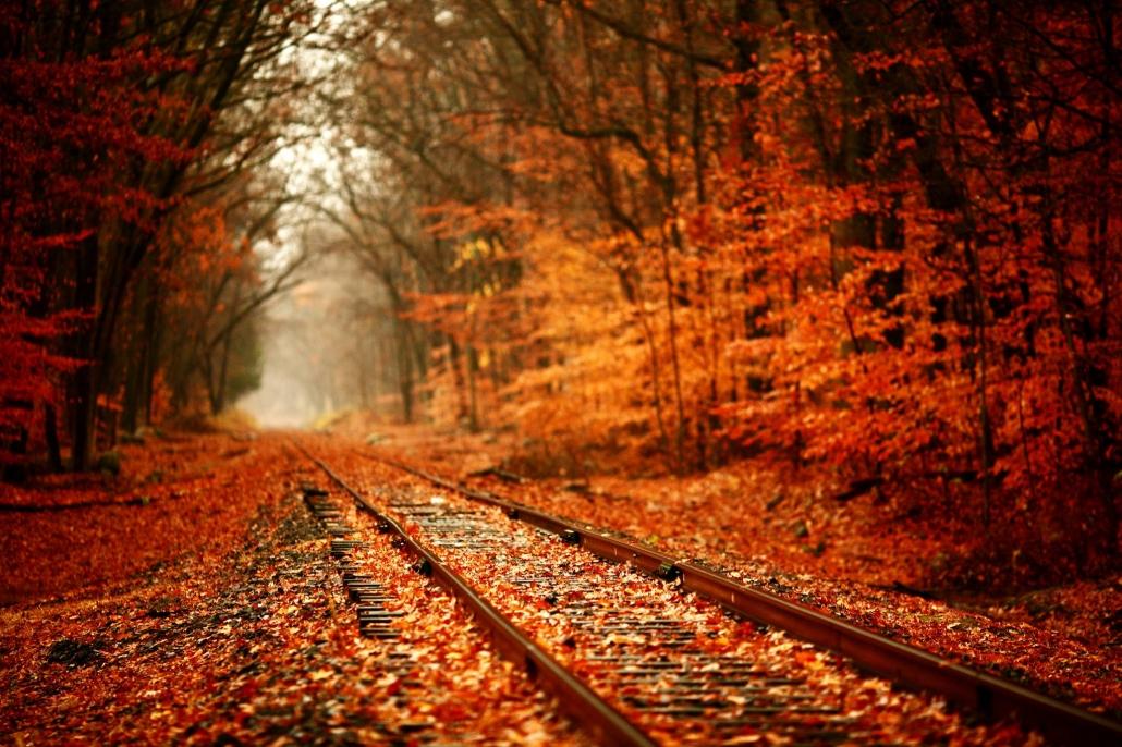 catskill mountain railroad fall flyer kingston ny happenings